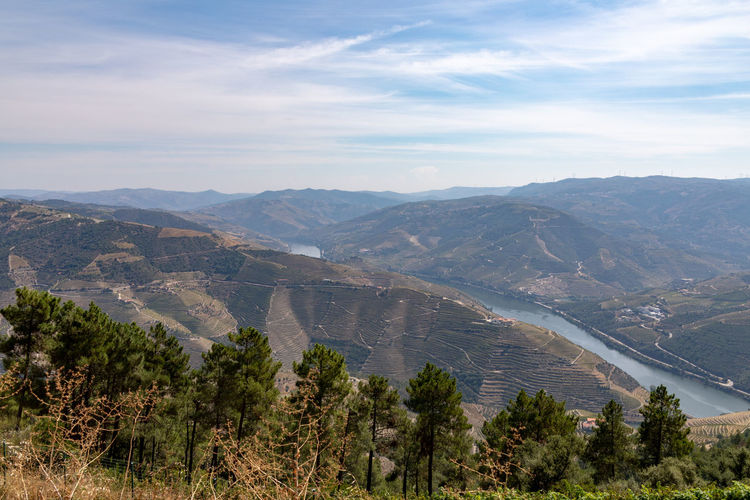 Vineyards on hills around River Douro in Portugal. , the oldest wine region in the world Beauty In Nature Cloud - Sky Day Environment High Angle View Idyllic Land Landscape Mountain Mountain Range Nature No People Non-urban Scene Outdoors Plant Scenics - Nature Sky Tranquil Scene Tranquility Tree