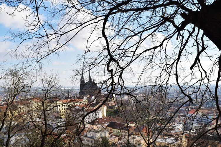 Branch Brno Citescape City Day No People Scenery Sky Tree View From The Top Showcase April
