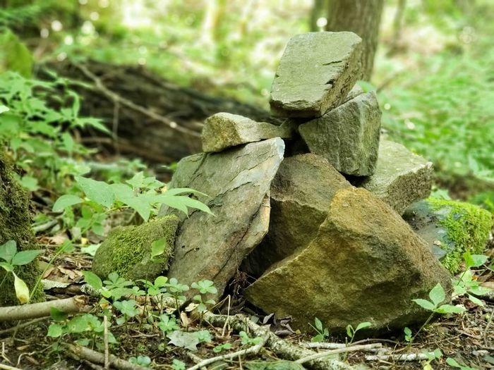 Close-up of rocks on field