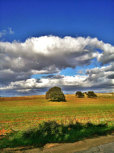 Landscape Paesaggio Landscape Tree Nature