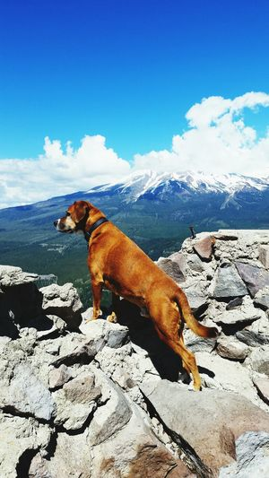 Dog standing on rocks against snowcapped mountains