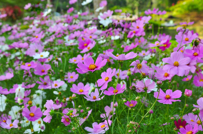 beautiful flowers Flower Pink Color Nature Plant Beauty In Nature Petal Fragility Outdoors Growth Day Flower Head Freshness Close-up Flowerbed