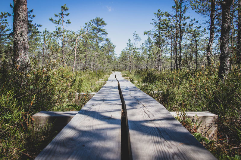 Diminishing perspective of boardwalk amidst trees