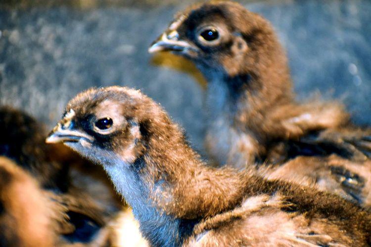 Bird Young Bird
