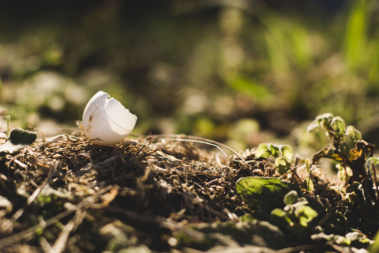 Close-up of egg shell on field