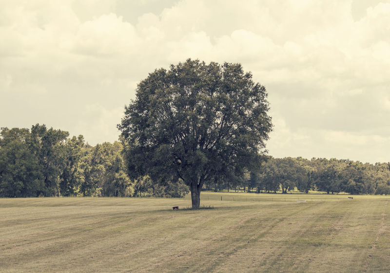 Ocala, Florida. Solo Nature Tree Ocala Florida Hues Minimalism Fine Art Photography