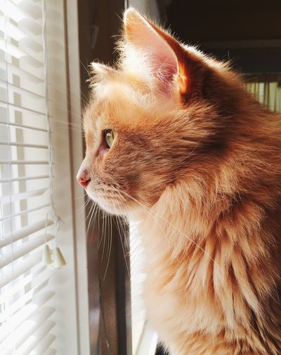 Cats 🐱 Cats Of EyeEm Pets Sitting Window Day Indoors  Feline Close-up No People Domestic Cat Whisker Animal Themes One Animal Domestic Animals Looking Through Window Home Interior Capture Tomorrow
