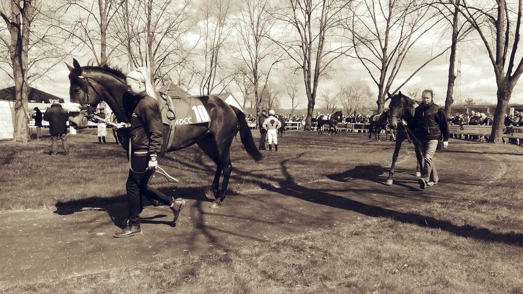 Sepia Monochrome The Places I've Been Today Racehorse I Love Horses Peoplephotography Show Me Your Sepia Animal Photography Horsesport