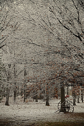 Beautiful winter scene at Heritage Village in Kingsville, Ontario, Canada. Branch Heritage Village Nature Nature No People Outdoors Snow Snow Flakes Vintage Winter Beauty ❄ Winter Scene