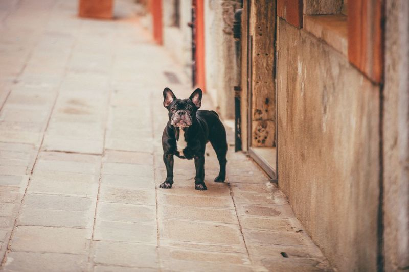 EyeEm Selects Dog Pets Animal Domestic Animals One Animal Animal Themes Outdoors This Is Strength