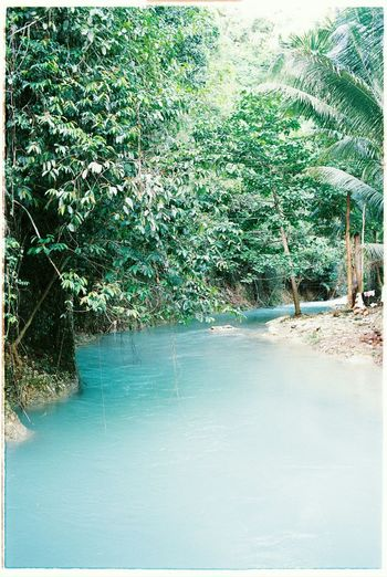 A beautiful river in Kawasan River Peaceful Nikon 35mm 35mm Film