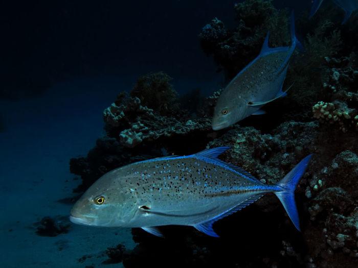 Nature Marine