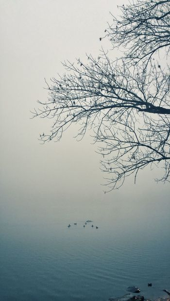 Atmosphere Bare Tree Birds Branch Cold Temperature Distant Fog Low Angle View Majestic Nature Nature Outdoors Peaceful Prospect Park Reflection Remote Silhouette Tranquil Scene Tranquility Tranquility Tree Waterscape Winter