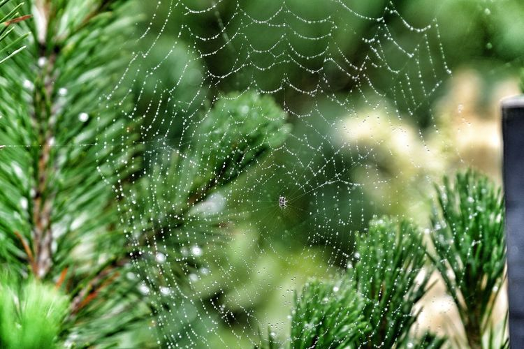 Close-up of wet spider web against plants