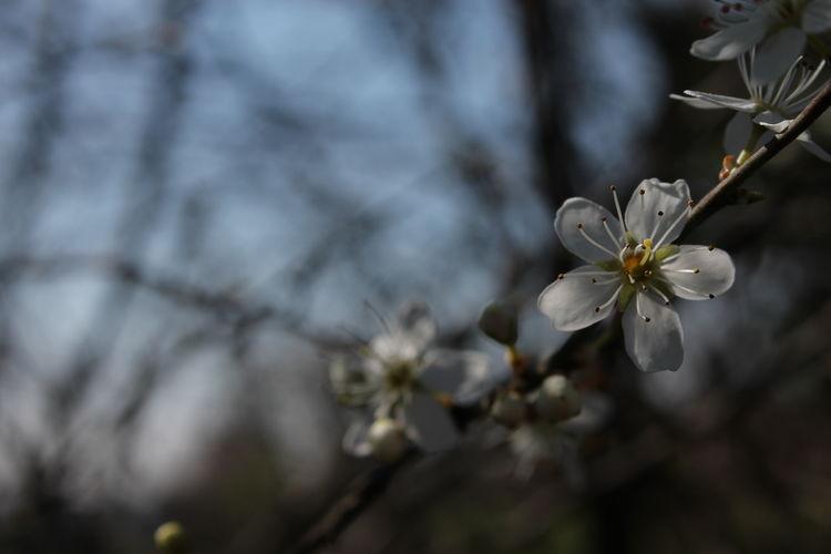 Spring! (not