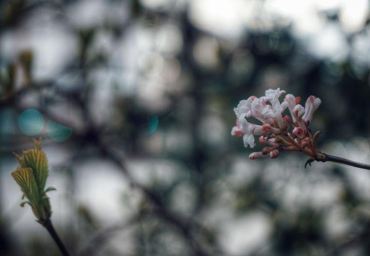 2019 Niklas Storm April Flower Head Tree Flower Branch Springtime Pink Color Petal Blossom Botany Close-up Flowering Plant My Best Photo