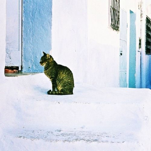 Chefchaouen,Morocco. @thebluepearlchefchaouen Catchefchaouen Bluecity Chefchaouen Chaouen Morocco Xaouen Visitchefchaouen Welovechefchaouen