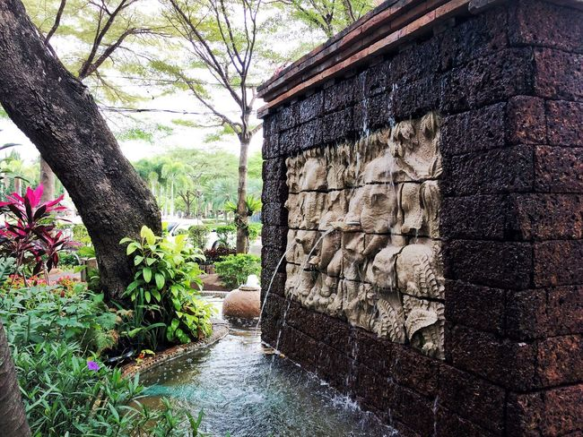 Water Nature Outdoors Plant No People Growth Day Tree Building Exterior Built Structure Architecture Animal Themes