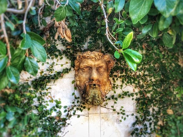 Man's Head Fountain surrounded by foilage. Plant Leaf Nature Outdoors Day Green Color Growth Statue Mans Head Water Fountain Foilage Close-up EyeEmNewHere Full Frame Backgrounds Garden Fountain Garden Architecture Italian Fountains EyeEmNewHere