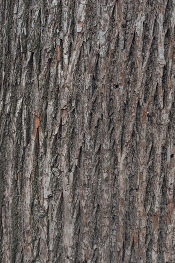 Oberfläche Backgrounds Close-up Full Frame Nature No People Outdoors Pattern Raster Rough Structure Textured  Tree Tree Trunk Weathered Wood - Material