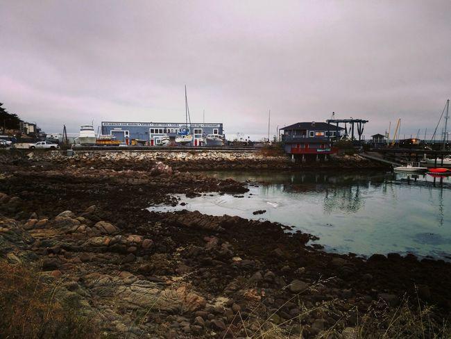Lowtide  Lowtidephotography Monterey Beach Life Beach Ocean Shipyard