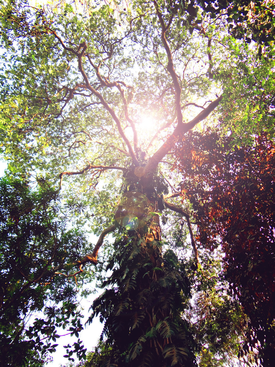 tree, growth, low angle view, branch, nature, tree trunk, sunlight, day, outdoors, beauty in nature, no people, forest