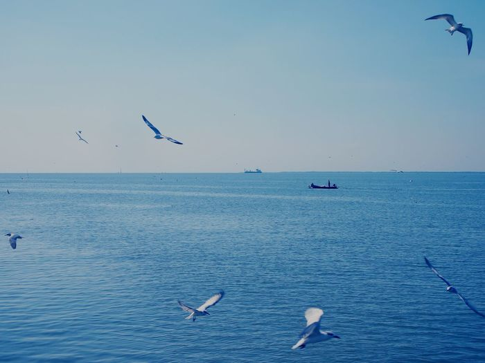 Flying seagulls and spot fishing boat Bird Water Flying Sea Life Sea Clear Sky Beach Blue Flock Of Birds Seagull Spread Wings It's About The Journey