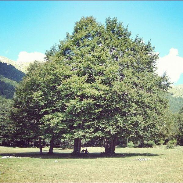 Colosso Nature Bignature Albero Tree Parconazionaledabruzzo Giant Pianta Plant