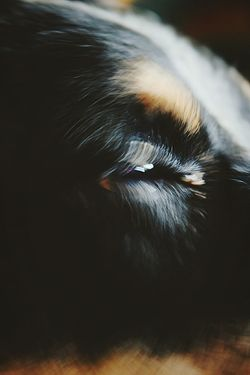 Dog Eye Movement Close-up Perspective Black Background Beauty