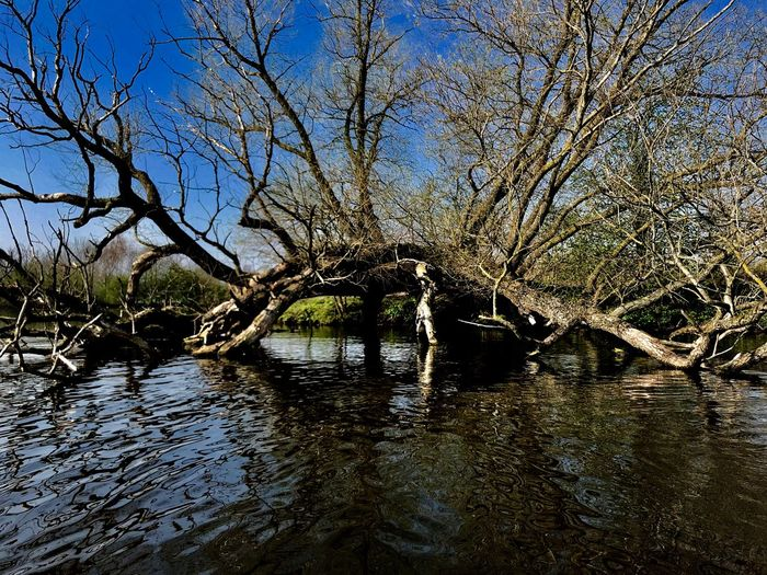 Bare trees by river against sky