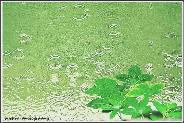 Rain drops ~ A Rainy day in Bangladesh.