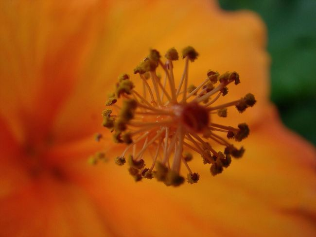Yorange Flowerlovers Macro_flower Flowers 🌷 Flowers 🌹 Macro EyeEm Macro Taking Pictures Fortheloveofcolor Beautiful Nature EyeEm Nature Lover Hanging Out
