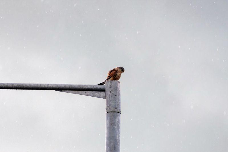 Bird perching on a pole