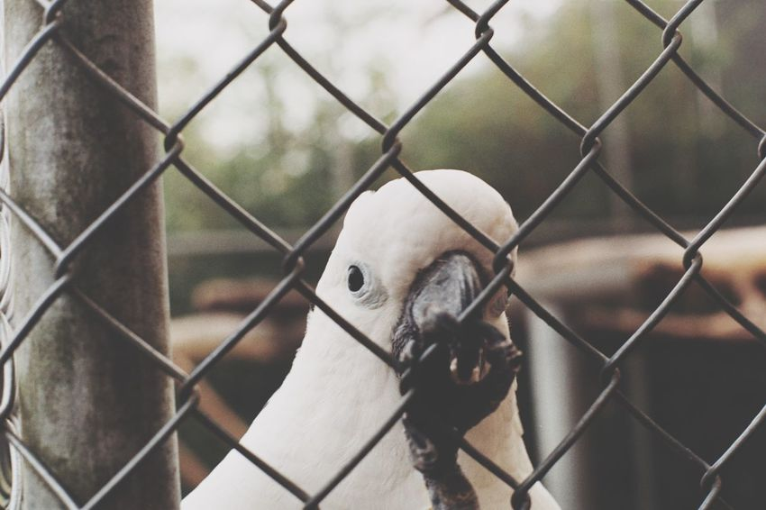 Bird EyeEm Selects Chainlink Fence Security Metal Safety Protection Day No People Close-up Mammal Outdoors Beard Nature