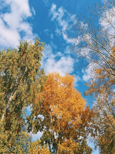 Три состояния твоей души Low Angle View Cloud - Sky Plant Sky Tree Nature Growth Day Beauty In Nature No People Tranquility Outdoors Multi Colored Scenics - Nature Sunlight Blue Leaf Backgrounds Plant Part Branch