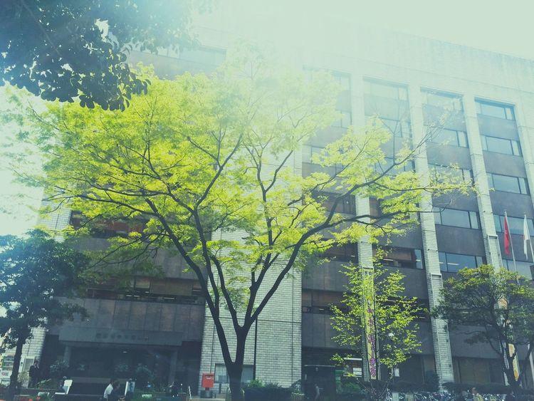 新緑 木 Green Tree