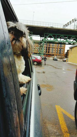 Dog Guardianof Jacques Cartier Bridge