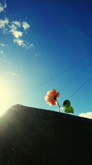 Flowers against sky