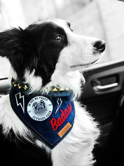 Badass Dog Fashion Bad Boy  Badass Punk Rock Canine Dog One Animal Pets