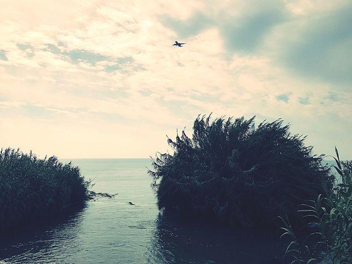 Sky Flying Sea