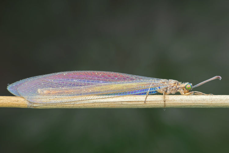 Close-up of damselfly on plant stem