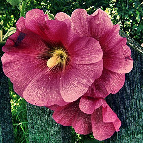 Nature_collection Redflowerpower Summer Flowerporn