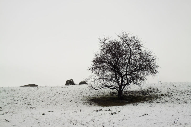 shape of a tree Backgrounds Cold Cold Temperature EyeEm Best Shots EyeEm Gallery EyeEm Of The Week Shapes And Forms Shapes In Nature  Snow Tree