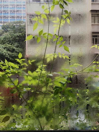 Light And Shadow Urban Landscape Misty Window Condensation On A Window Plant Sun And Shadow Building Exterior Street Of Hong Kong Green Leaves Greenery