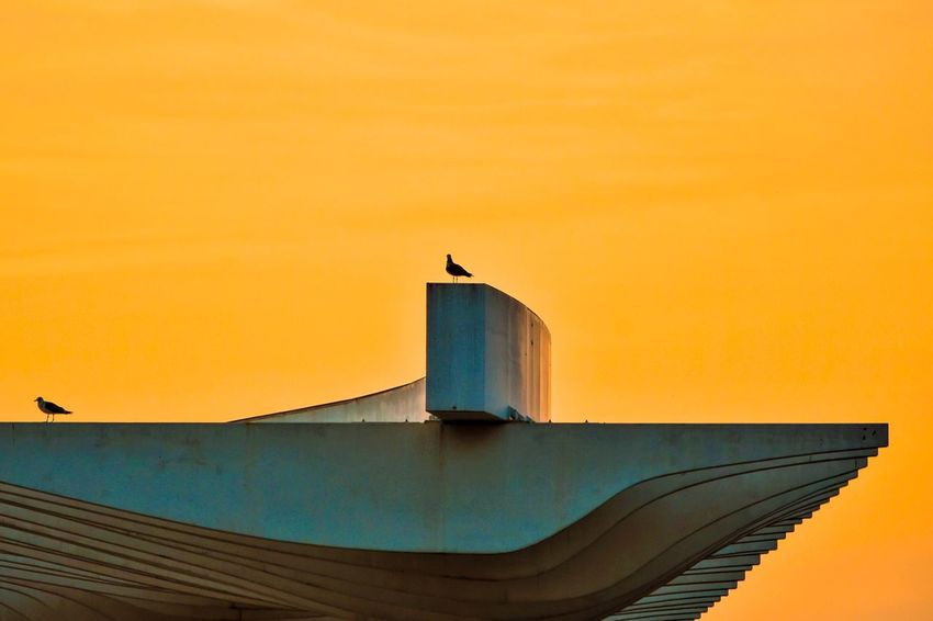 Waiting the Sunset Sand Storm Minimalism Architecture Building Exterior Minimalist Architecture Respect For The Good Taste EyeEm Best Shots Let's Do It Chic! Exceptional Photographs Sky And Clouds Silhouette Orange Color Sunset Built Structure Street Photography Paint The Town Yellow My Best Travel Photo