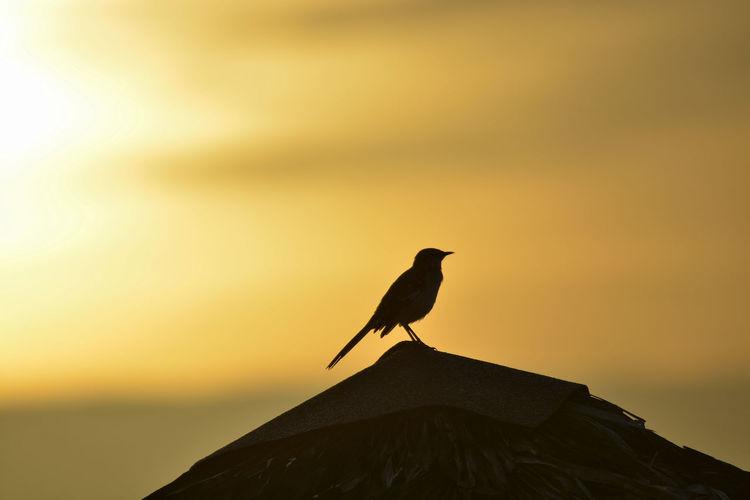 Bird perching on a roof