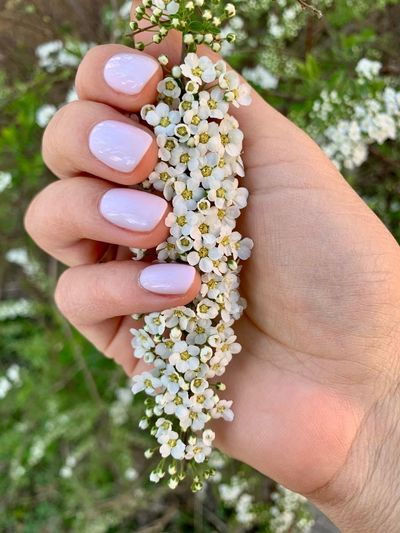 In My Hand Human Hand Hand Holding Human Body Part Lifestyles Finger One Person Freshness Plant Body Part Human Limb Flower Head Flowering Plant Flower Nature Unrecognizable Person Close-up White Flower Manicure Spring Flowers The Minimalist - 2019 EyeEm Awards