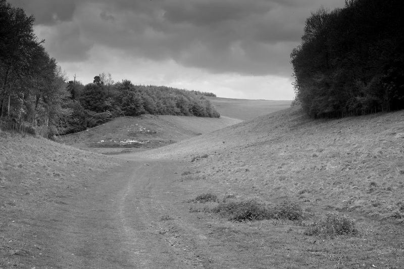 Decision Time Cloud - Sky Landscape Tree Environment The Way Forward Direction Nature Road Tranquility Dirt Road Decisions Junction Blackandwhite Black And White