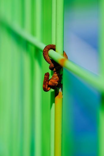 stylelife 24 february 2019 Colours colour of life love yourself Low Angle View Expression Abstract Photography Sports Training Public Sport Streetphotography Macro Photography Rusty Blue Door Red Close-up Animal Themes Green Color Latch Padlock Locked Safe Keyhole Key Ring Door Knocker Closed Hope Hinge