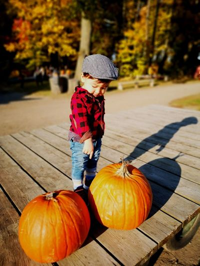 Boy pointing while standing by pumpkins on land